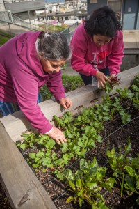 Potrero Hill community members tending the garden