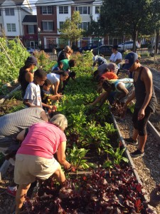 People harvesting produce at Fairgate Farm
